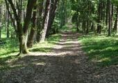 sous bois en Pologne