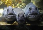 Puzzle Aquarium LR