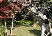 Jardin des BONZAI