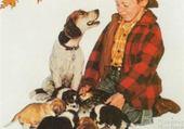 Garçonnet, chienne et ses chiots