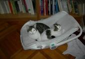 Olivia et Totti