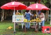 marchand de fruits à Maurice