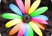 Fleur couleurs