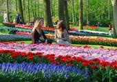 Profusion de tulipes