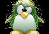 Cactus pinguin