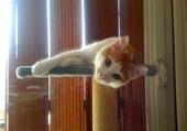 c'est mon chat !!!