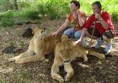 Puzzle PROMENADE AVEC LES LIONS