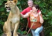 Puzzle regard de lion