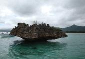 benitier sur l ocean indien
