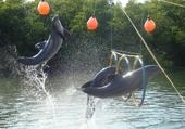 Puzzle dauphins sauteurs