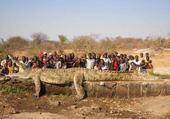 Puzzle crocodile monstrueux