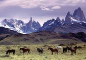 montagne et chevaux