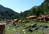 Puzzle alpage - Hautes Alpes