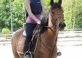 Un cheval et sa cavalière