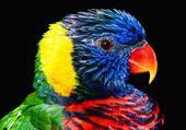 magnifique perroquet