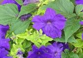 Puzzle fleurs d'été
