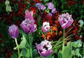 Puzzle Tulipe dans jardin