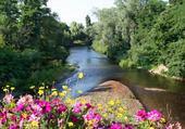 Rivière fleurie
