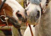 bisou cheval