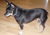 Lili chien de luxe