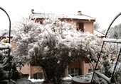Gerbe de neige