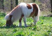 Mon poney ♥