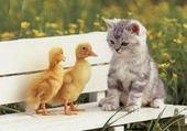 chat et pigeon