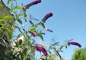 L'arbre à papillons