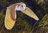 Puzzle owls...