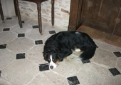 mon chien bouly