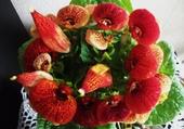 Jolies petite fleurs