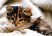 chatons trop mignon
