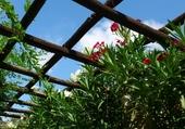 fleurs à Nice