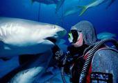 Puzzle Requin tigre