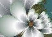Puzzle fleur blanche