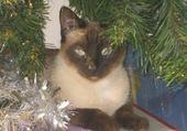 Perle, chat magnifique