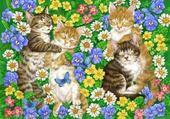 Amours de chats
