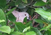 Dans l'arbre