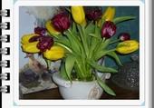 pot de tulipe