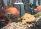 poisson laveur de vitre