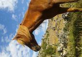 mon cheval
