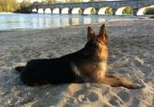 Feever sur la plage