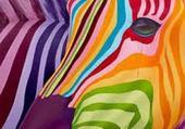 Zebre en couleurs