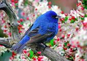 Puzzle l'oiseau bleu