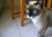 Un chat a l'air coquin