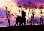 Un cheval,une histoire...