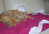 Mon chat: Minouche