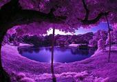 Puzzle paysage violet