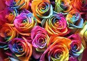 Puzzle roses multicolor