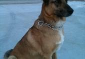 eskimo mon chien